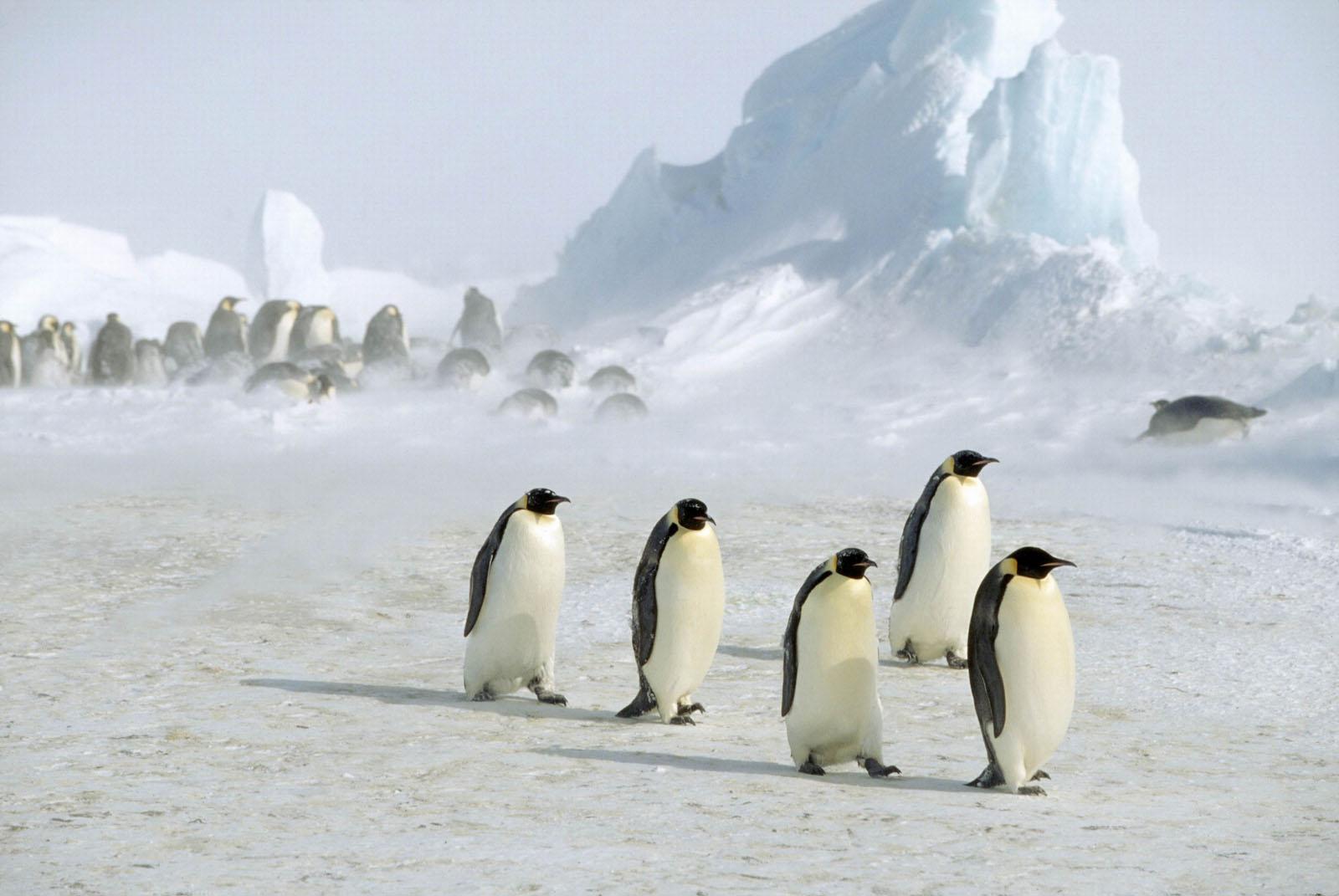http://phototry.narod.ru/images/animals/animal9_20070601_1637416995.jpg